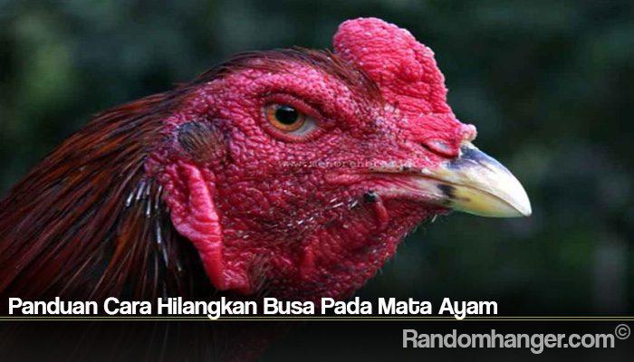 Panduan Cara Hilangkan Busa Pada Mata Ayam